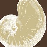 Natural Shell II