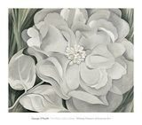 The White Calico Flower, c.1931 Reproduction d'art par Georgia O'Keeffe