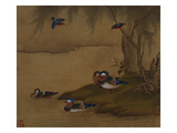 A Pair of Falcons from an Album of Bird Paintings