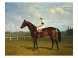 The Racehorse  'Northeast' with Jockey Up