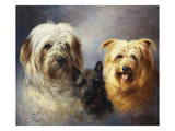 A Tibetan  a Cairn and a Silky Terrier