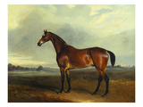 A Bay Hunter  the Property of the Hon F Craven in a Landscape