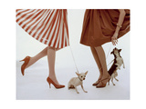 Vogue - February 1959 - Pumps and Pups Photo premium par William Bell