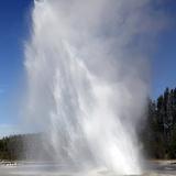 Daisy Geyser Erupting  Upper Geyser Basin Geothermal Area  Yellowstone National Park