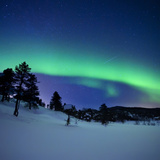 Aurora Borealis and a Shooting Star in the Woods of Troms County  Norway