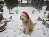 A Dog Wearing a Santa Hat Sitting in the Snow