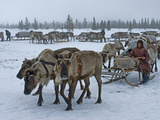 Komi Herding Clan Matriarch Prepares to Drive a Train of Sleds