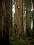The Patriarch Grove Has the Largest Volume of Redwood Trees