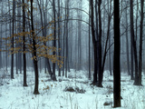 An Early Winter Forest Scene in Eastern Ontario