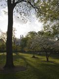Late Afternoon in Piedmont Park in Midtown  Atlanta
