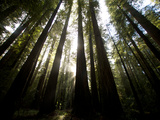 Bull Creek Flats  Home to Many of the Tallest Redwood Trees on Earth