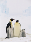 Emperor Penguin (Aptenodytes Forsteri) Parents with Two Chicks  Antarctica