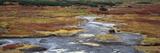 Brown Bear (Ursus Arctos) Crossing River  Kamchatka  Russia