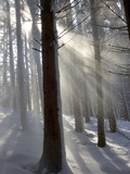 Snowy Forest in Morning Sun  Bavaria  Germany