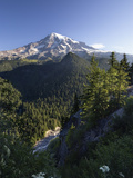 Mount Rainier Surrounded by Forest  Washington