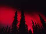 Red Aurora Borealis over Boreal Forest  Alaska