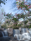 Cherry Trees and Fountain at the Franklin Delano Roosevelt Memorial