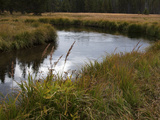 Grasslands Along the Banks of the Gibbon River