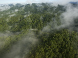New Guinea's Foja Mountains Stand Above Surrounding Lowland Forest