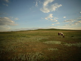 A Horse Grazing on the Edge of the Town of Pine Ridge