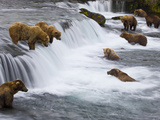 Brown Bears Wait for Sockeye Salmon to Jump at Brooks Falls