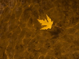 A Leaf Floating on Water