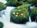 Stream with leaves on mossed stones  Bavarian forest