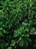Lush Plants in Hawaiian Rainforest