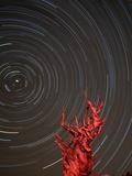 Star Trails and Bristlecone Pine Tree