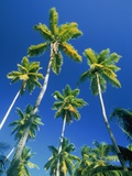Palm trees  Seychelles  Africa