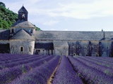 Lavender Field at Abbeye du Senanque