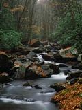 Stream Running Through Forest