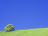 Tree and Hill