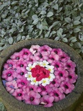 Stone Bowl Filled with Plumeria Blossoms