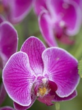 Rare  beautiful orchids bloom in a Florida garden