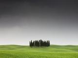 Cypress Grove in Field