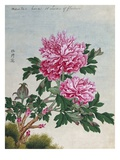 Chinese Watercolor of Pink Peonies