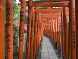 Red Arches Along Path to Nezu Shrine