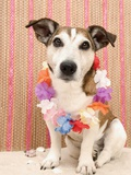 Dog with Lei