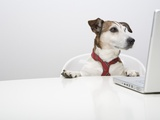 Dog in Front of Laptop at Desk