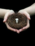 Birds Nest in Cupped Hands