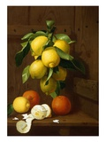 A Still Life of Lemons and Oranges