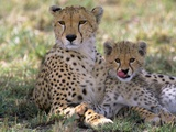 Cheetah Mother and Cub Resting in Shade Together Papier Photo par John Eastcott & Yva Momatiuk