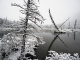 Pond and Forest in Winter