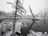 Pond and Forest in Winter Papier Photo par John Eastcott & Yva Momatiuk