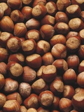 Hazelnuts in Shells