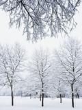 Englischer Garten's Snow Covered Trees