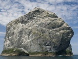 Northern gannet nesting colony atop Stac Lee