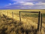 Fence Along Field  South West Saskatchewan  Canada