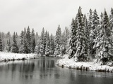 Fresh  Heavy  Wet Snow on Trees Along Banks of Junction Creek  Lively  Ontario  Canada